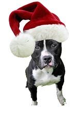 petey-in-santa-hat